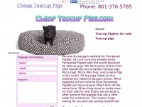 Cheap Teacup Pigs | Real Teacup Pigs | Good deal on teacup pig