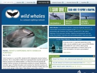 Wildwhales.org - WildWhales | BC Cetacean Sightings Network