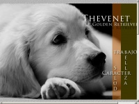 Thevenet.es - GOLDEN RETRIEVER THEVENET. GOLDEN RETRIEVER